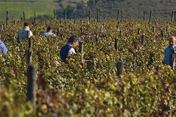 winery basilicata