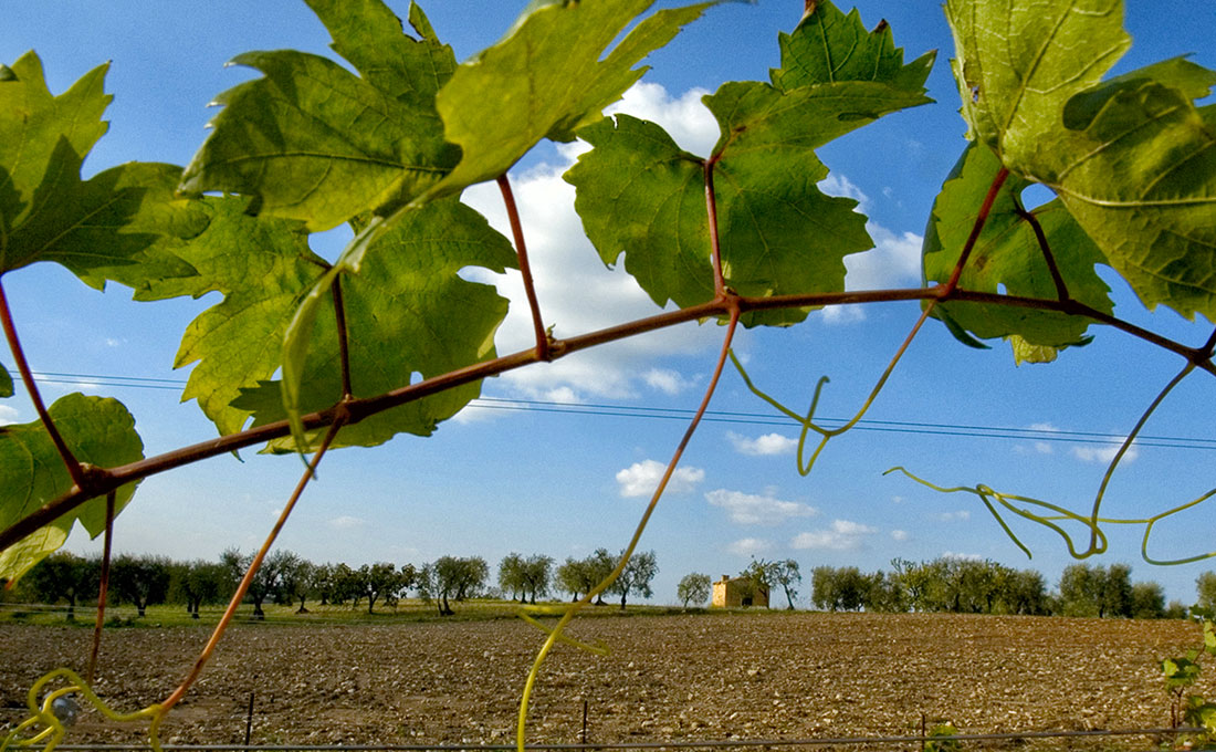 winery-southern-italy-03
