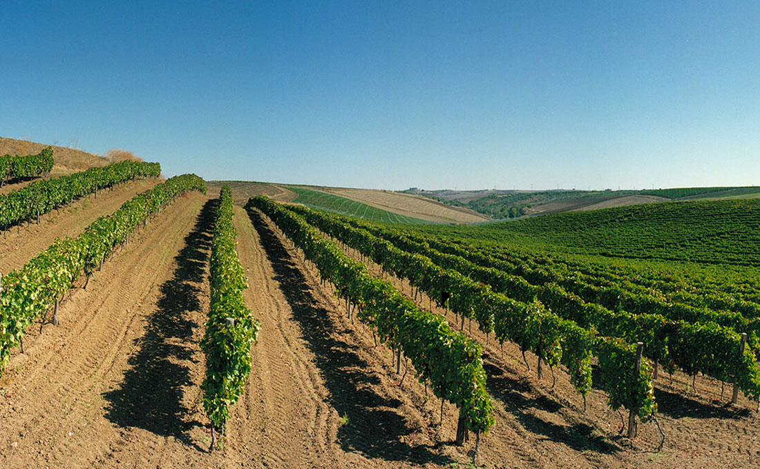 winery-southern-italy-05