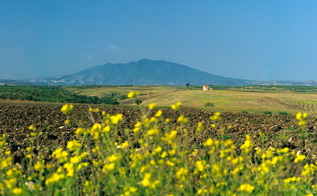 winery-southern-italy-07