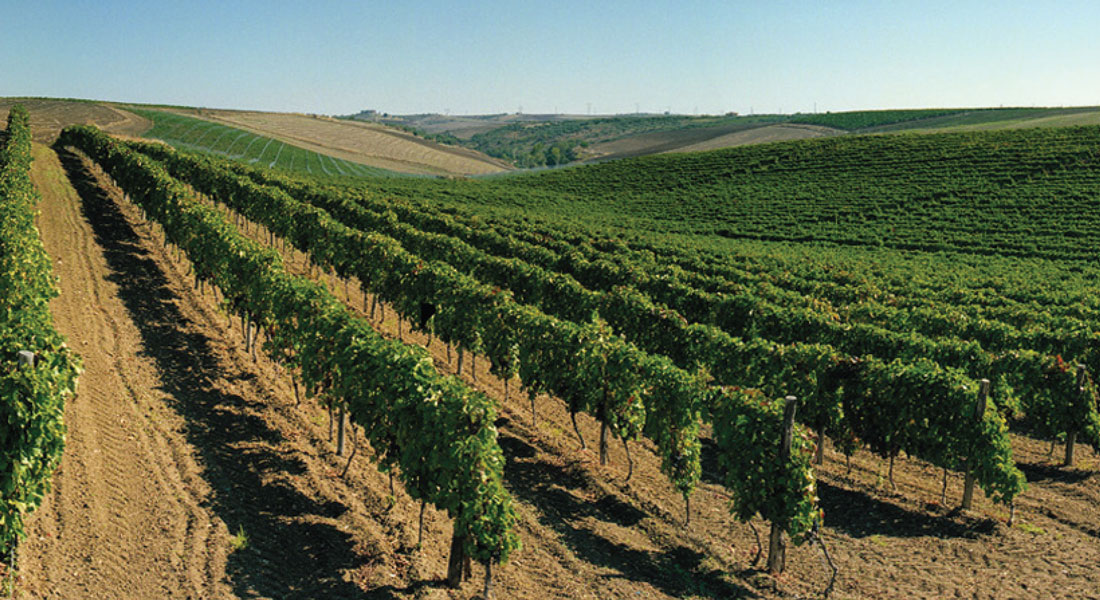 basilicata-viticoltura